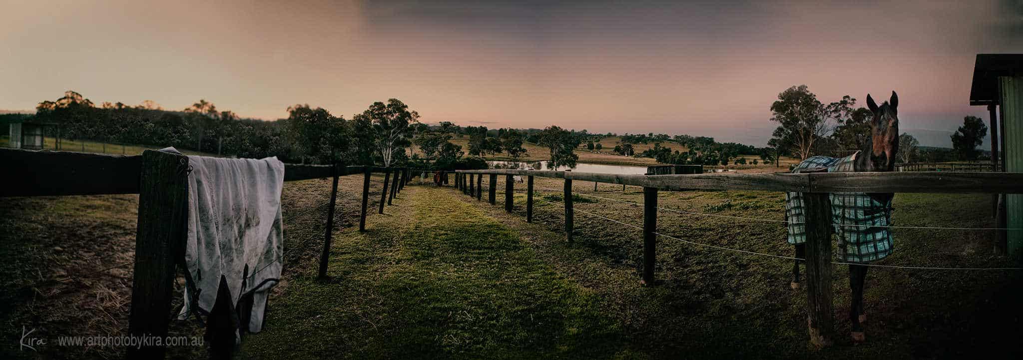 horse photography Sydney